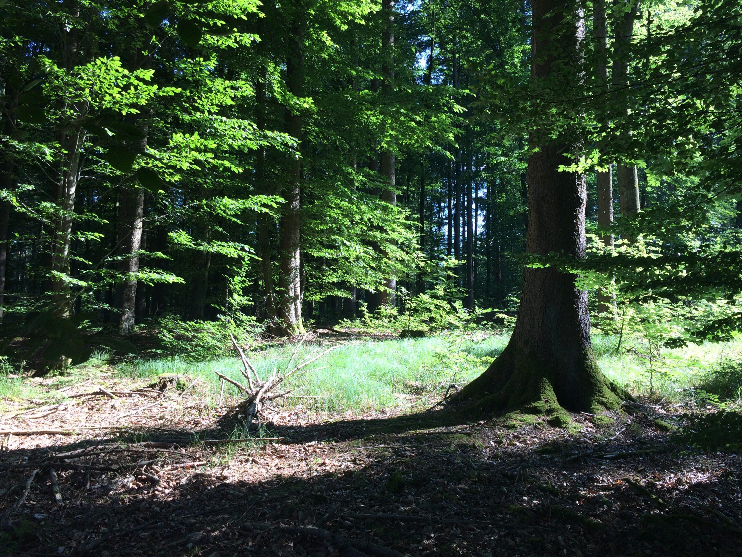 Natur Coaching im Naturpark Westliche Wälder